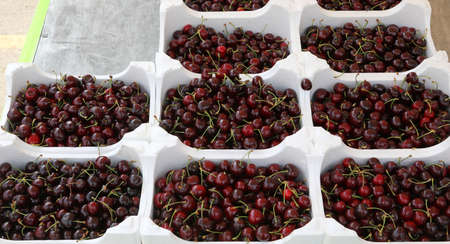 Fruit market and many trays of ripe cherries for sale in summer