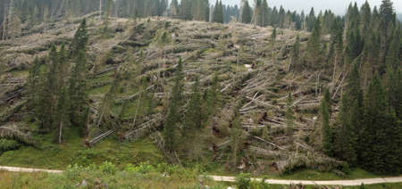 hill with many fallen trees after the hurricane