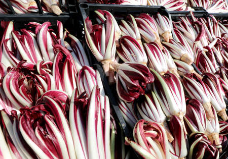 Red chicory also called Radicchio Tardivo in Italian language in the boxes at vegetables market