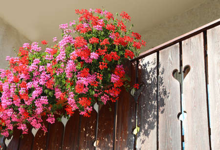 Balcony with many pots of geraniums in summer