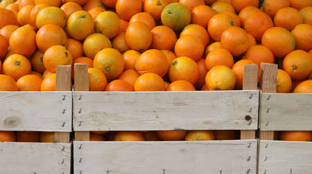 many boxes of big ripe oranges for sale at market