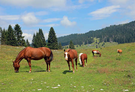 family of many horses in mountains in summer