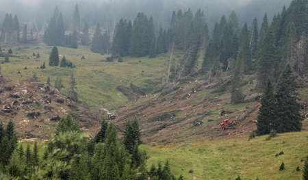 deforestation in mountain with machine earthmover in summer