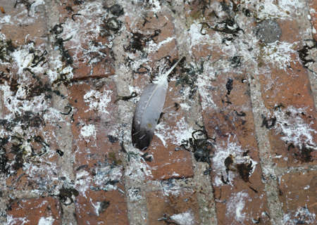 background of guano or Bird feces of pigeons Stock Photo