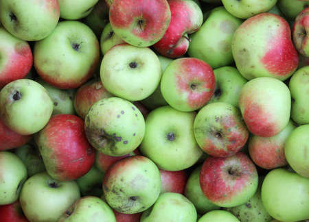 background of many biological apples for sale at organic market