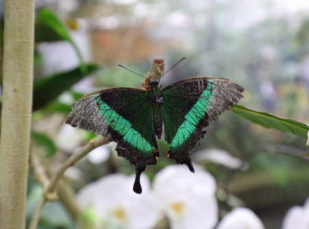 butterfly of different colors attached to a branch of a plant
