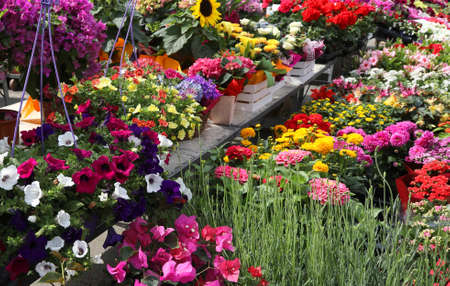 colorful and fragrant spring flowers at the Amsterdam market Imagens