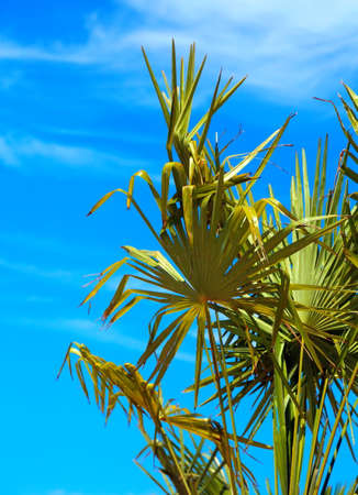 palm tree and blue sky in summer on the resort