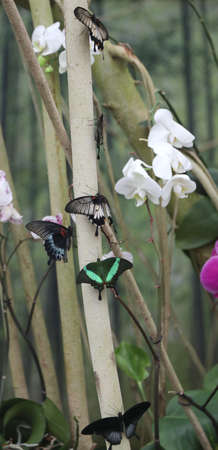colorful spring butterflies suck the sweet nectar from a flower immersed in the jungle Zdjęcie Seryjne