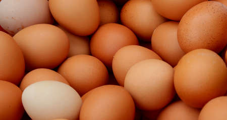 Many eggs of hen for sale at farm