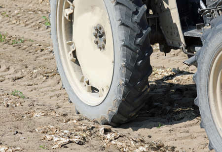 big tractor wheel in cultivated field after harvesting vegetables