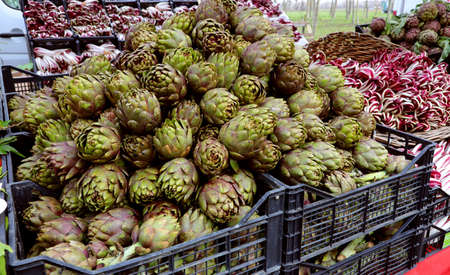 crates full of many ripe large artichokes just picked in the fruit and vegetable market Banco de Imagens