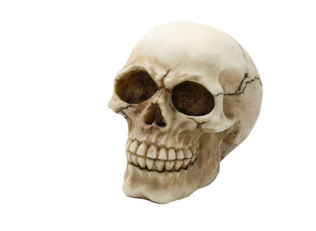cast of a human skull with clearly visible teeth on a white background