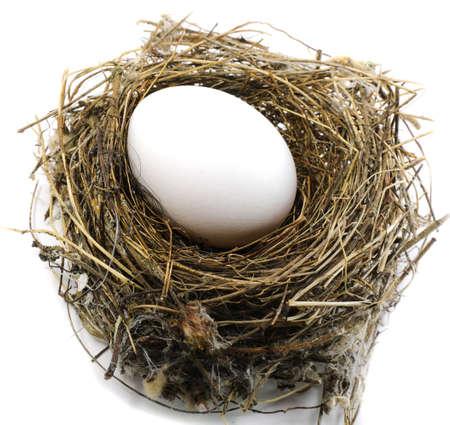 white egg on the nest of a bird on white background