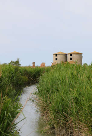 abandoned industrial building and the swamp with many reeds