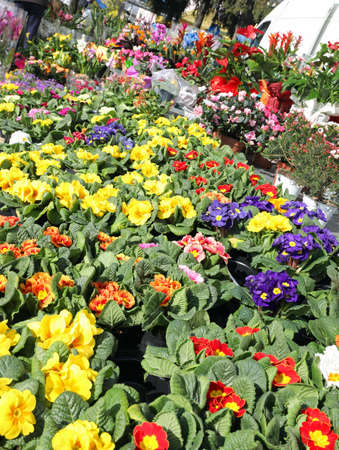 market with a stall full of flowers of different species and colors