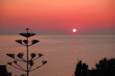romantic sunset with the sun on the horizon as it disappears on the fiery sea and the typical vegetation of the Mediterranean areas Foto de archivo