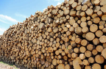 large woodpile with many trees cut by lumberjacks for the construction industry Foto de archivo