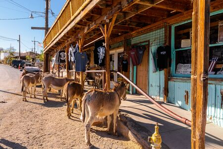Mules resting in the oatman country along Route 66 Stock Photo