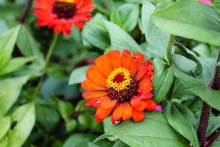 in particular: particular orange daisy in germany Stock Photo