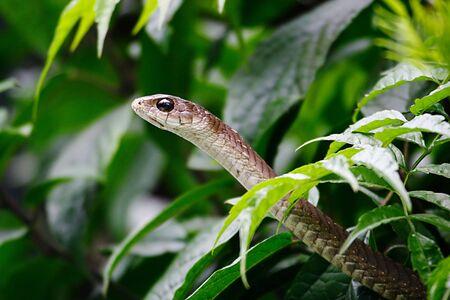 savana: Snake coming out of a shrub