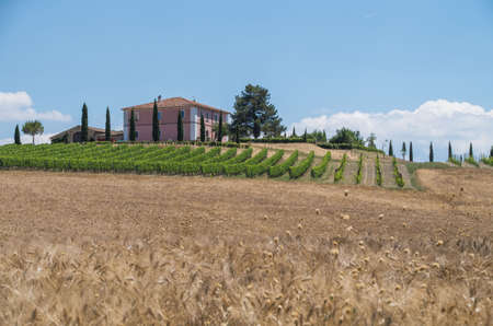 Country house in Tuscany surrounded by wheat fields and vineyards