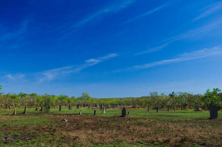 Termite Mounds on green grass under clear and blue sky