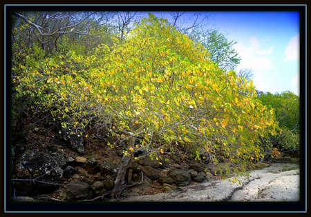 hojas: Magic tree