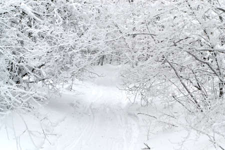 The road in winter, disappearing into the trees and shrubs, with ski