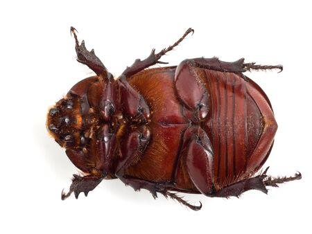 Big beetle on the isolated background