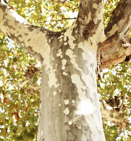 seemingly: Fragment of a tree with a bark similar to a camouflage grid. Stock Photo