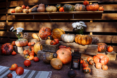 Autumn composition of pumpkins on straw. Pumpkins are different, onions, straw, shelves, and a basket with apples. The concept of harvesting.
