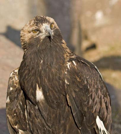 carnivore: Carnivore bird Stock Photo