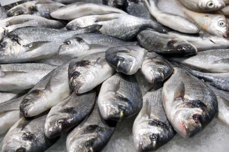 catch of fish: Pile of silver fish on ice, fish market Stock Photo