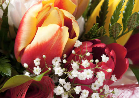 Tulip petals - post card, detailed  macro shot photo
