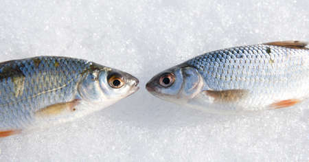 stupidity: Two roaches - communication concept, gossip, stupidity