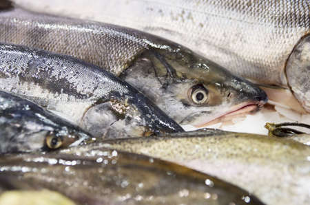 Fresh seabass on market stall, closeup shot photo