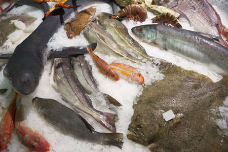 Great variety of fish and seafood on fish market ice display photo