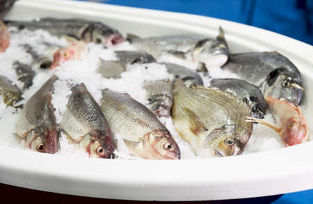 gilthead bream: Cold container with seabass and dorade (gilthead bream) Stock Photo