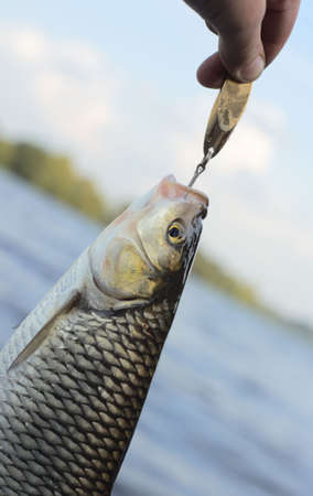 Chub caught on brass lure against water and sky Stock Photo - 5774163