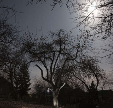 Creepy garden, fool moon. Note the ghost by the tree! Stock Photo - 5853932