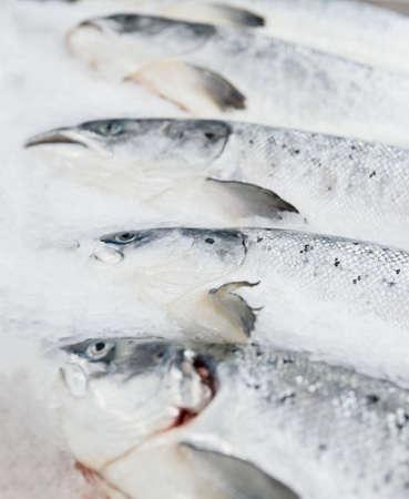 fish store: Mostrar de salm�n en mercado refrigerada, portarretrato disparo