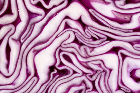 xxxl: Txture of red cabbage, XXXL size, macro lens used Stock Photo