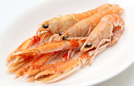scampi: Three raw langoustines (scampi) on porcelain plate