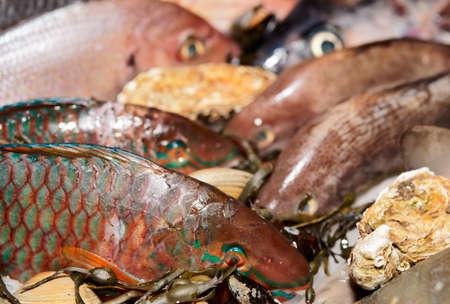 Great variety of fish on fish market ice display photo
