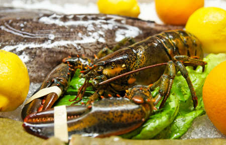 Live lobster on market display, close-up shot Stock Photo - 10991040