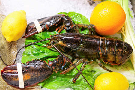 fish shop: Live lobster on market display, close-up shot Stock Photo