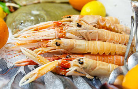 Scampi (langoustines) on a cooled market display photo