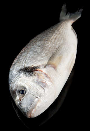gilthead bream: Dorade - gilthead bream - isolated on black background Stock Photo