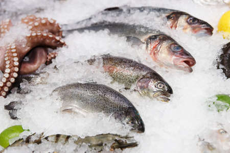 Trout, seabass and other seafood on iced market display photo